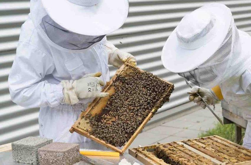 Myslivci, rybáři a včelaři pracují omezeně