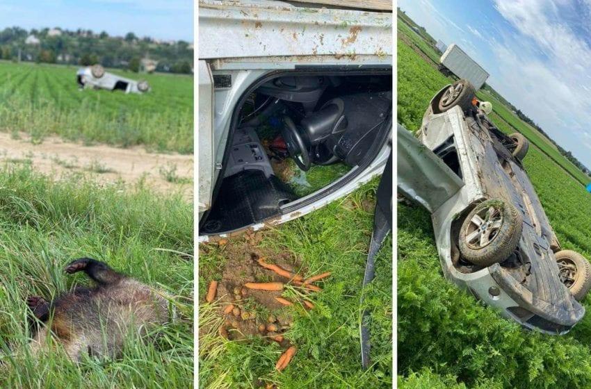 Srážka s jezevcem vymrštila vůz daleko do pole