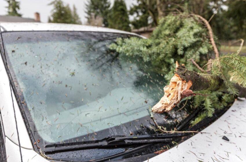 Dopravní nehody, padlé stromy a zatopené sklepy na Mladoboleslavsku