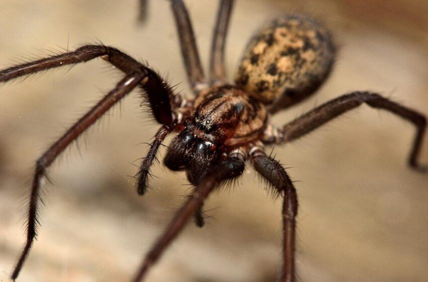 Chlapce na školním záchodě kousl pavouk. Děti dva dny nesmí do školy